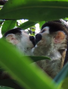 Monkey Kiss - Monkey Island Tour