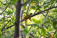 Raoul relaxing in the morning - Monkey Island Tour, Bocas del Toro, Panama